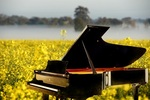 2014 Australian National Piano Award : Semi-finals