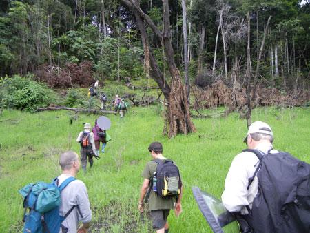 Amazon jungle - a field recording trip