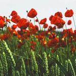 At the Eleventh Hour : Commemorating 100 years since the end of World War I