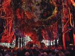 Boorna Waanginy: The Trees Speak : Perth Festival 2019