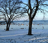 A winter morning in Visby.