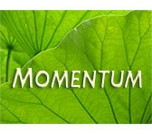 MOMENTUM commission announced